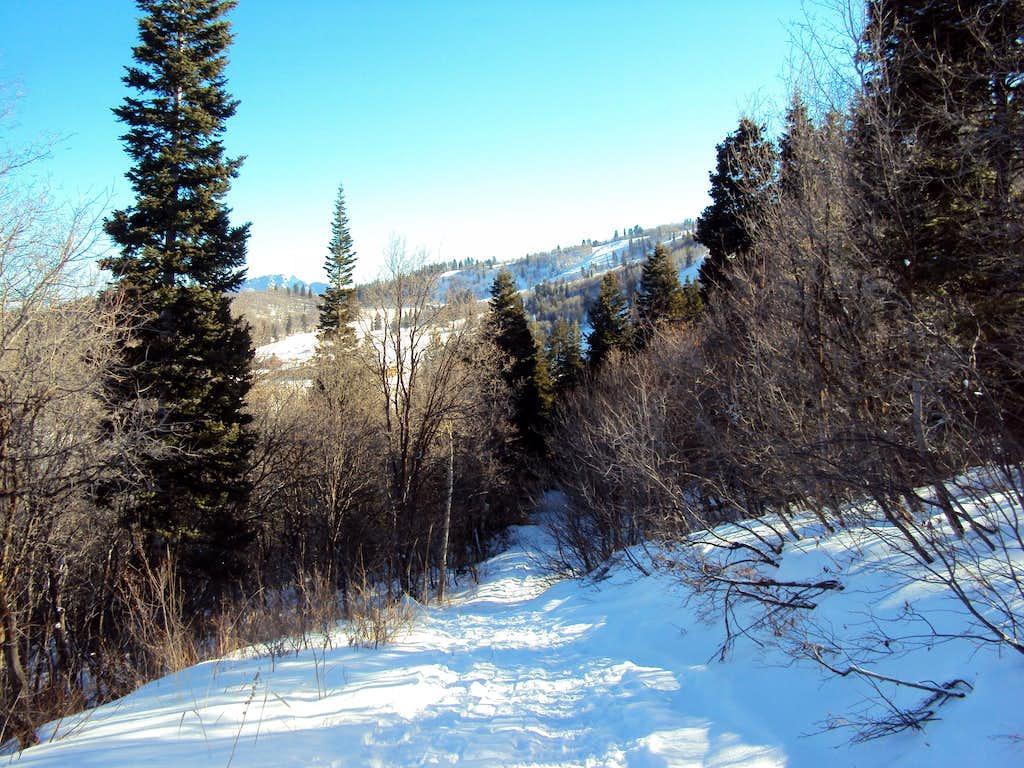 Trail under Power Lines