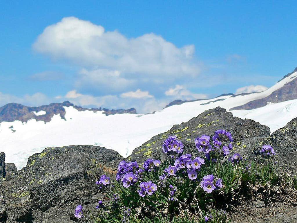 Purple Flowers near Base Camp