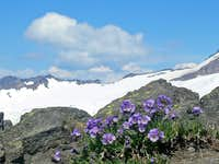 Purple Flowers near Base Camp
