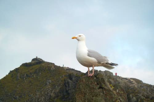 Standing guard over the summit
