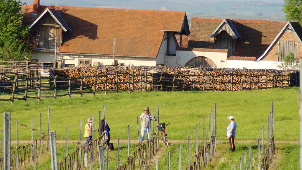 People working at the Havraniky wineyards