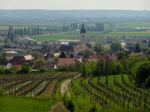 Retzbach behind the wineyards