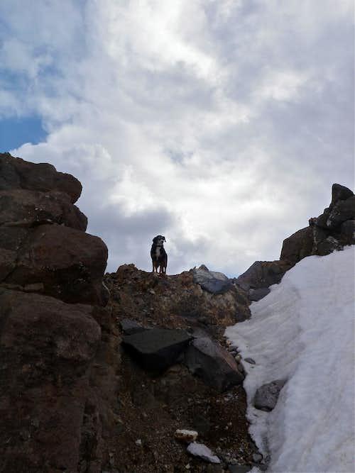 Duchess climbing Potosi