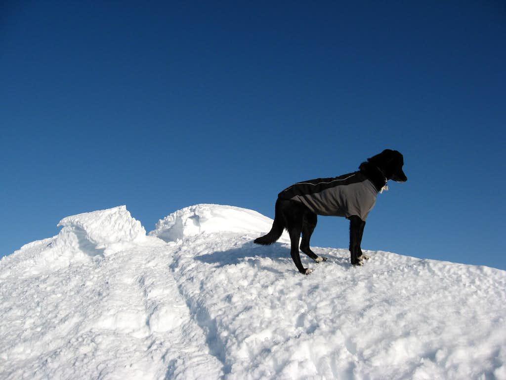 Cammie looking over Hood's summit ridge