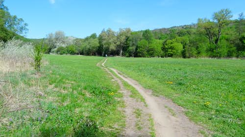 Meadow on the Dyje bank near Šobes