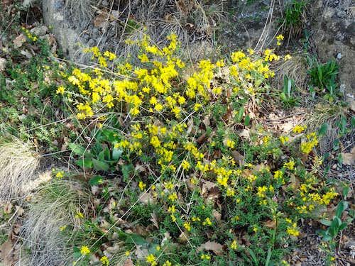 Flora in the Podyji national park