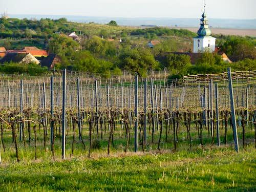 Havraniky wineyards and church