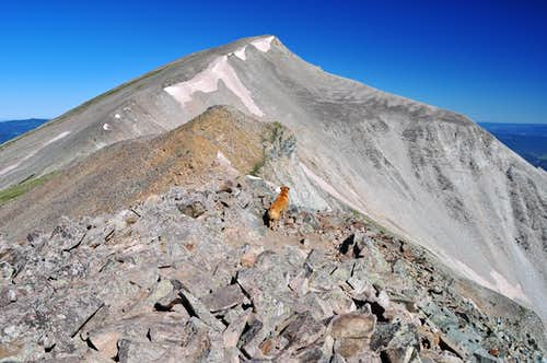My dog Sopris on Mount Sopris