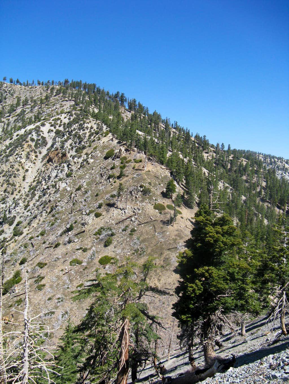 Bighorn ridge to Cucamonga trail