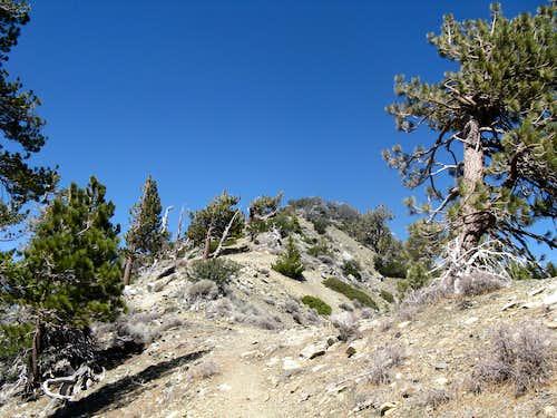 Telegraph Peak (last 1/4 mile)