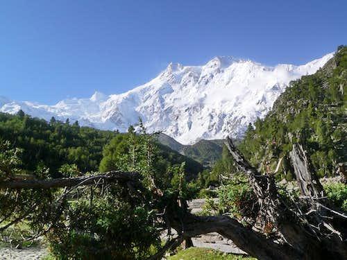 Nanga Parbat (8126 m)