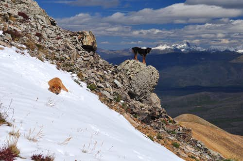 My dogs Sopris and Watanga on Parkview Mountain