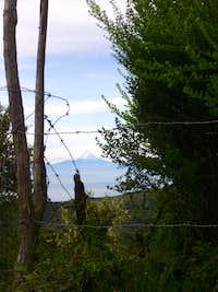 Cotopaxi seen from Urcusiqui