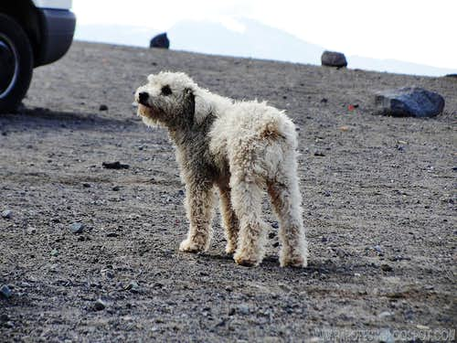 The DOG - Cotopaxi parking lot