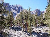 Bristlecones near Wheeler Peak