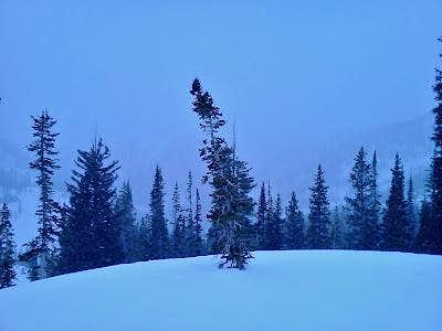 White Pines (Thunder Mountain)