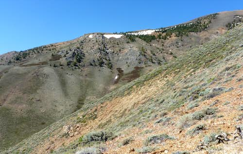 Heading up the Sawmill Ridge from Twin Lakes Road