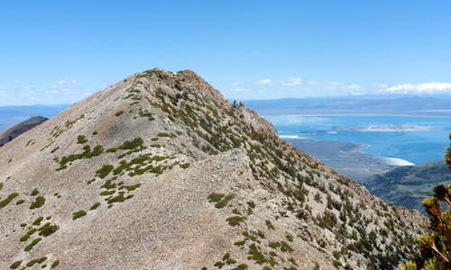 Looking back at Mount Olsen 11,086\' and Mono Lake while heading up South Peak