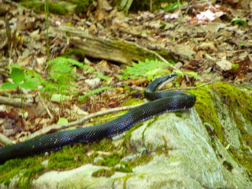 snake encounter on trail up Backbone Mountain