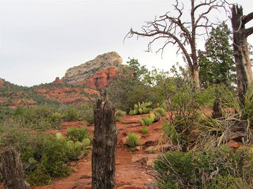 On Cibola Trail