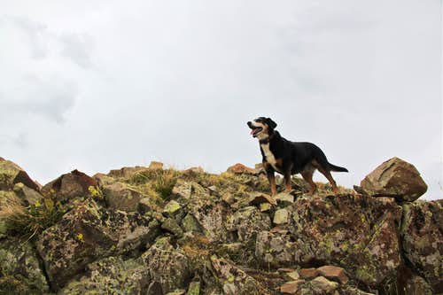 Duchess topping the summit ridge