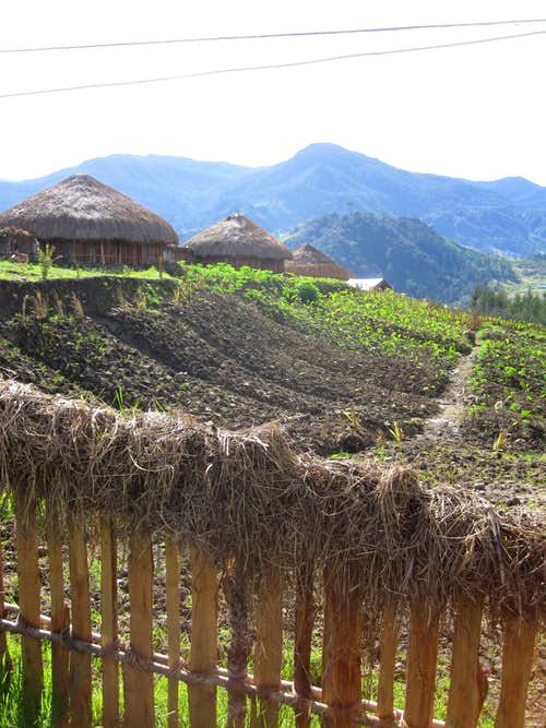 Exploring Mimika: 20th Century Conquistadors in Stone Age Papua