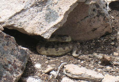 High mountain rattler