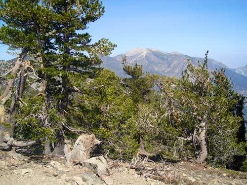San Gorgonio 9 Peaks Challenge