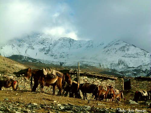 Annapurna trail - A donkeys'caravan nearby Muktinath