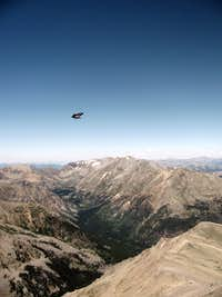 Accidental Bird on Mount Elbert