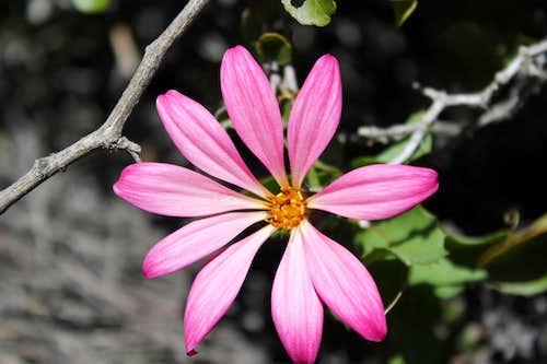 Provincia Flowers
