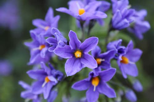 Provincia Flowers 2