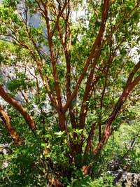 Awesome tree (Enipeea Canion)