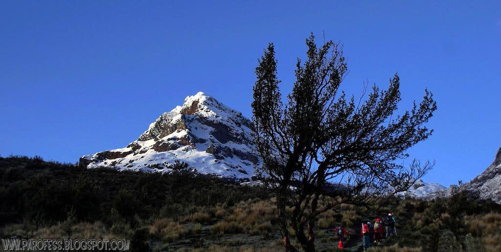 Illiniza Sur, tree and trekkers