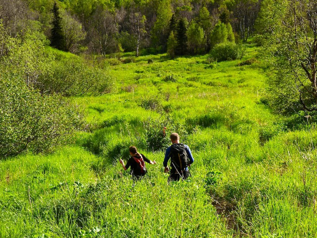 Long Meadow