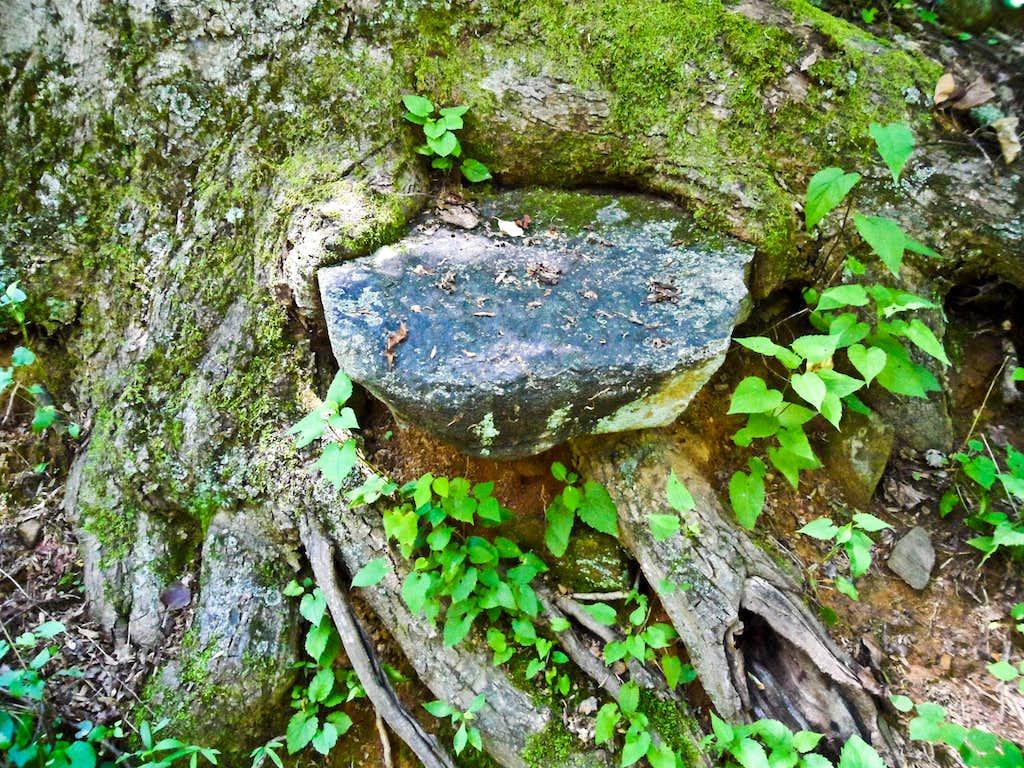 Strange Tree-Rock Formation