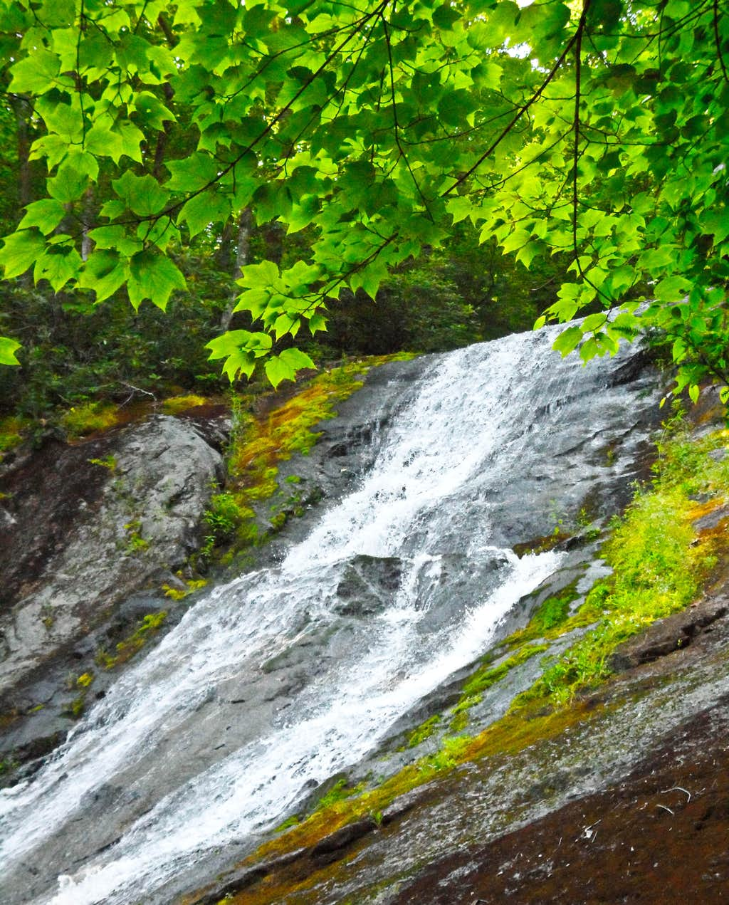 Cascades from the Forest