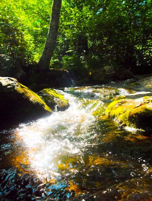 Idyllic Mossy Stream