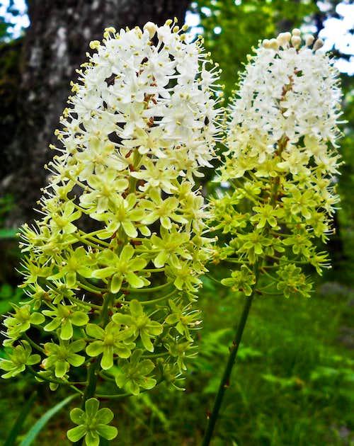 Flowers of The Priest Summit Ridge