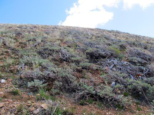 sagebrush near summit
