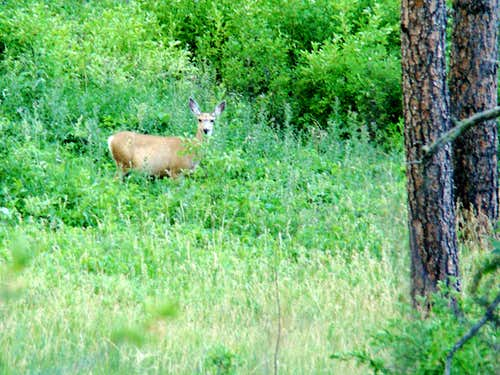Steamboat Trail Wildlife