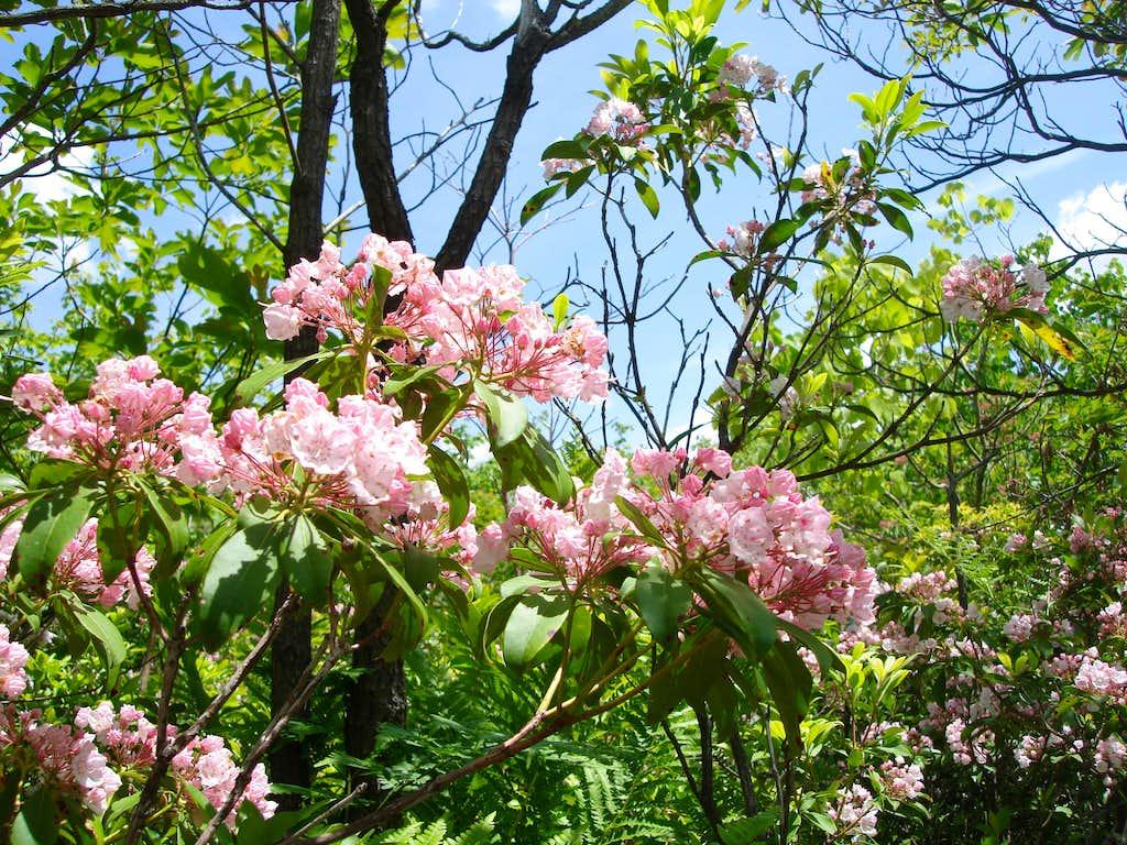 PA Flowers