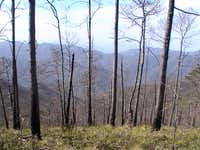Burnt Forests
