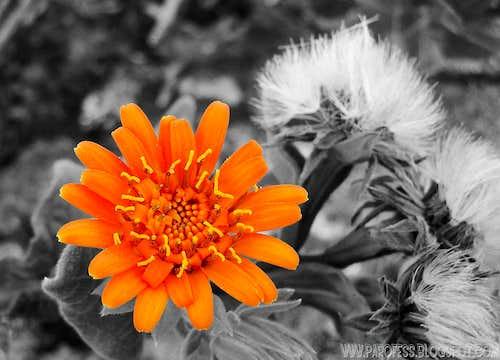 One more orange beauty
