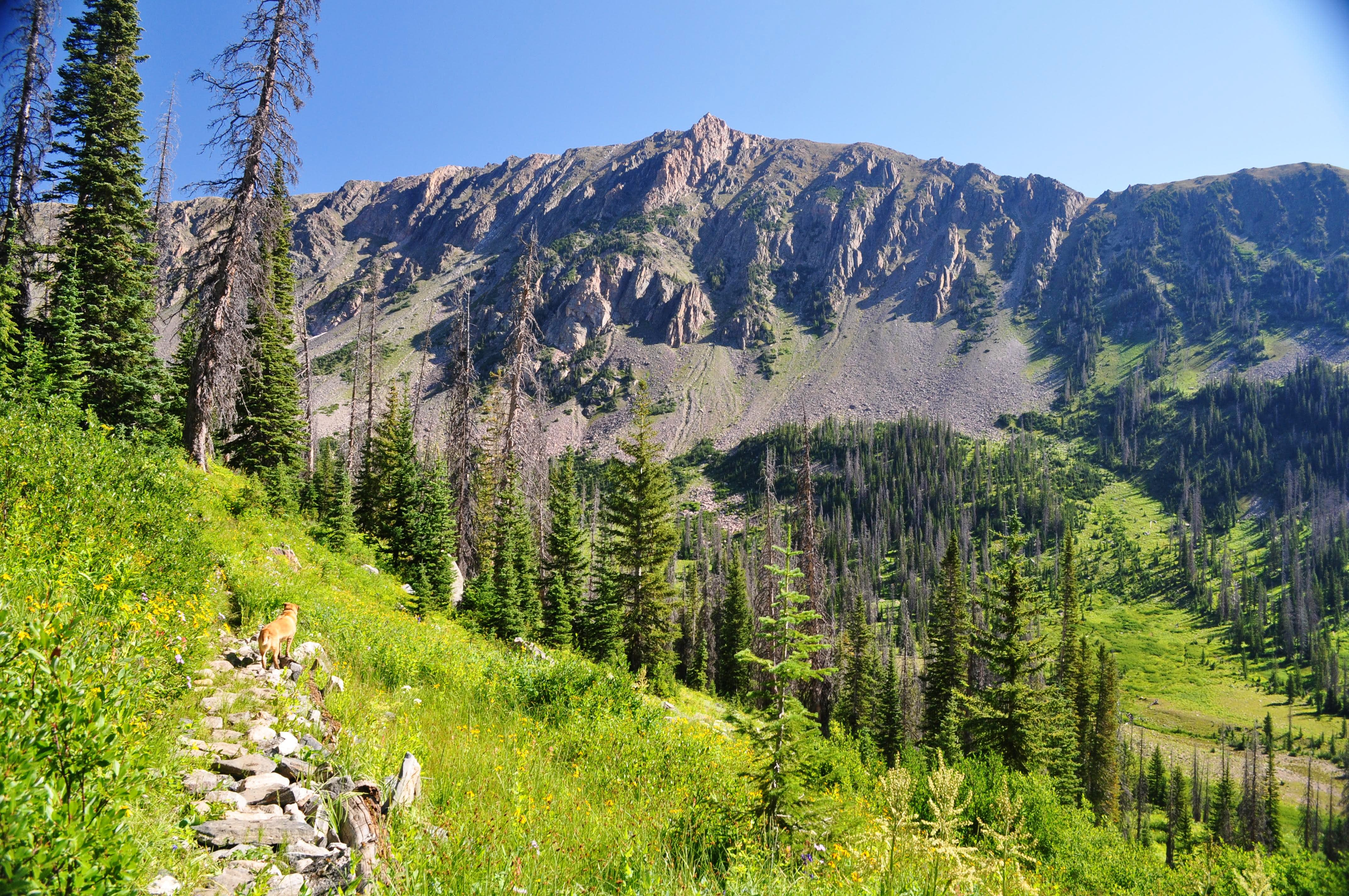 Flattop Mountain (Mount Zirkel Wilderness)