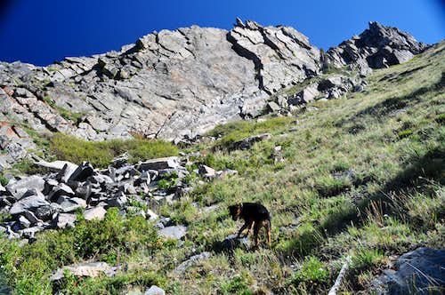 My dog Watanga ascending Flattop Mountain