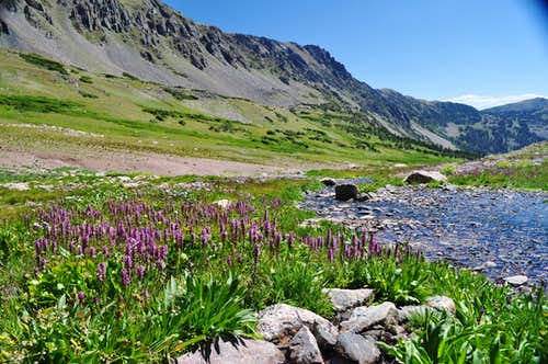 Flattop Mountain and Little Elephant Head flowers