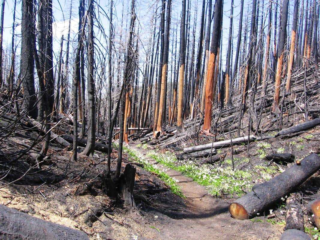 Hiking After Forest Fire, Mt. Hood : Photos, Diagrams ...