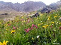 Upper Basin Wildflowers