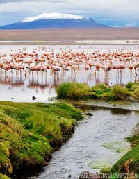 Point 5660m and Flamingoes
